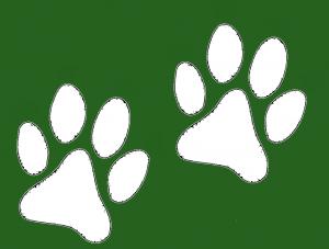 hundepfoten-weisgruen
